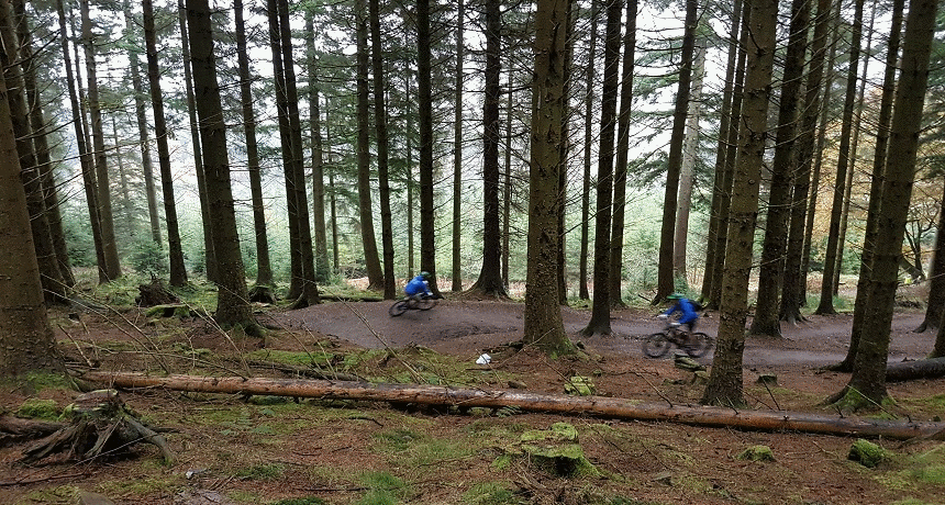 Mountain bikes in Whinlatter Forest