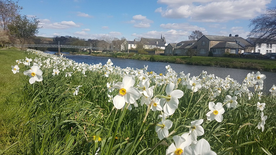 Daffodil Day in Cockermouth Town